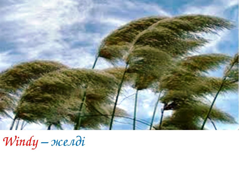 Windy – желді