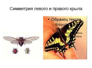 Симметрия левого и правого крыла