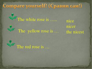 nice nicer the nicest The white rose is ….. The yellow rose is … The red rose