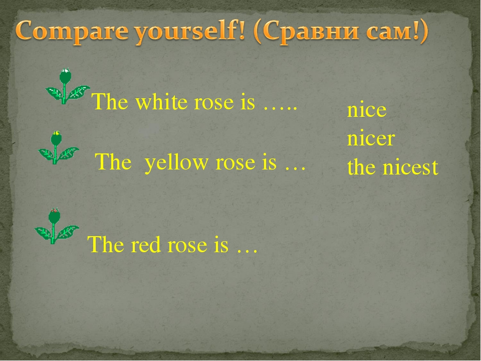 nice nicer the nicest The white rose is ….. The yellow rose is … The red rose...