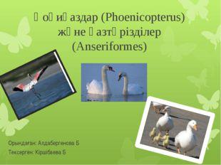 Қоқиқаздар (Phoenicopterus) және қазтәрізділер (Anseriformes) Орындаған: Алда