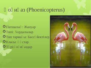 Қоқиқаз (Phoenicopterus) Патшалық: Жануар Типі: Хордалылар Тип тармағы: Бассү