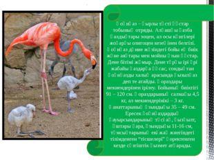 Қоқиқаз – қырлы төсті құстар тобының отряды. Алғашқы қазба қалдықтары эоцен,
