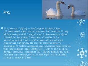 Аққу Аққулар (лат. Cygnus) — қазтәрізділер отряды, үйрек тұқымдасының жеке ту