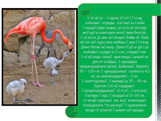 Қоқиқаз – қырлы төсті құстар тобының отряды. Алғашқы қазба қалдықтары эоцен,...