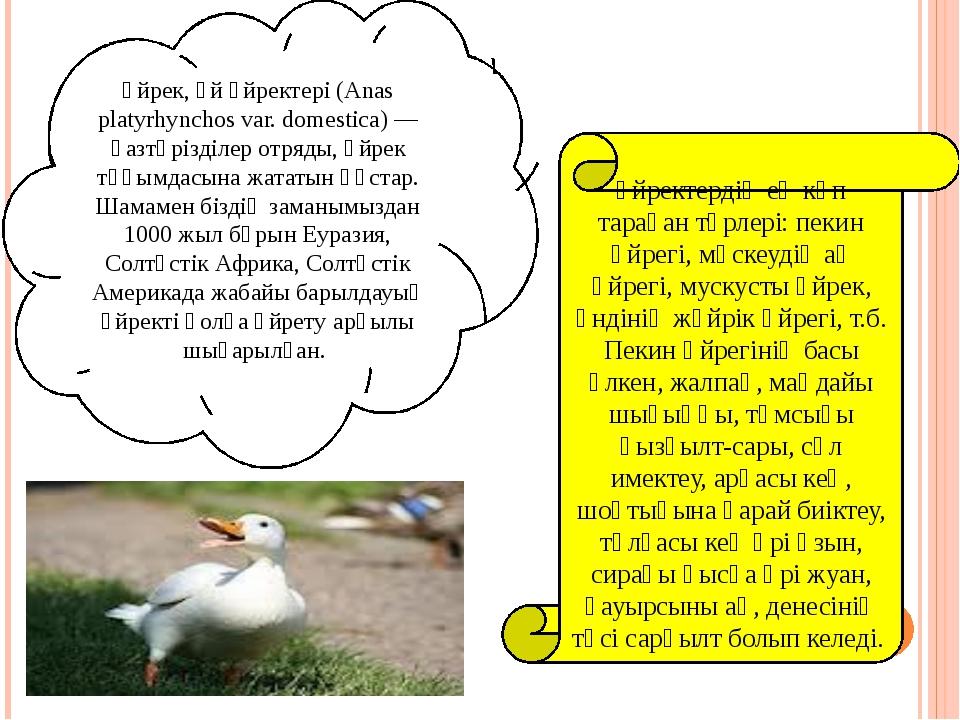 Үйрек, үй үйректері (Anas platyrhynchos var. domestіca) — қазтәрізділер отря...
