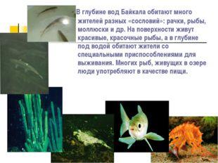 В глубине вод Байкала обитают много жителей разных «сословий»: рачки, рыбы,