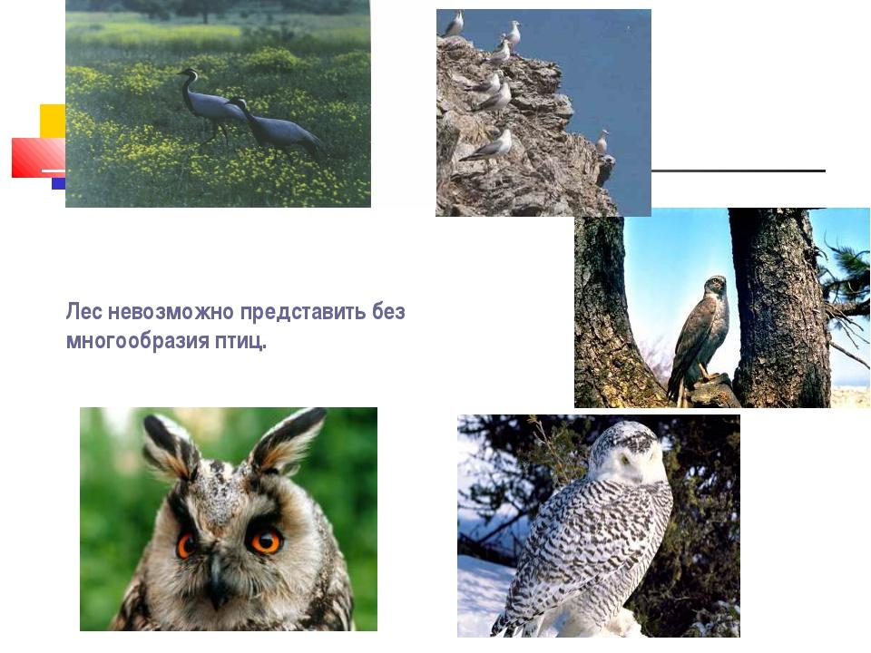 Лес невозможно представить без многообразия птиц.