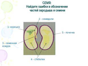 СЕМЯ: Найдите ошибки в обозначении частей зародыша и семени 2 - семядоли 1- к