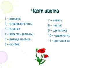 Части цветка 1 – пыльник 2 – тычиночная нить 3 – тычинка 4 – лепестки (венчик