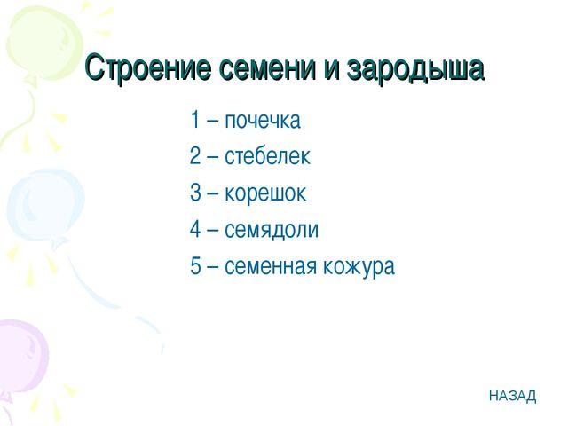 Строение семени и зародыша 1 – почечка 2 – стебелек 3 – корешок 4 – семядоли...