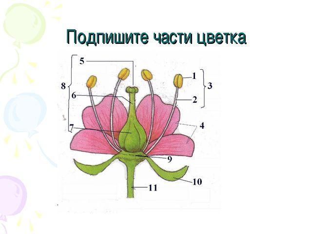 Подпишите части цветка