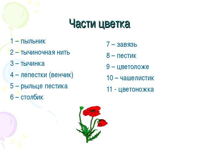 Части цветка 1 – пыльник 2 – тычиночная нить 3 – тычинка 4 – лепестки (венчик...