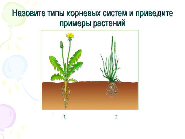 Назовите типы корневых систем и приведите примеры растений 1 2