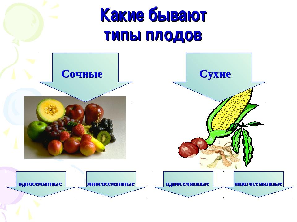 Какие бывают типы плодов