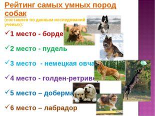 Рейтинг самых умных пород собак (составлен по данным исследований канадских у