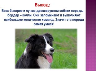 Вывод: Всех быстрее и лучше дрессируются собаки породы бордер – колли. Они за