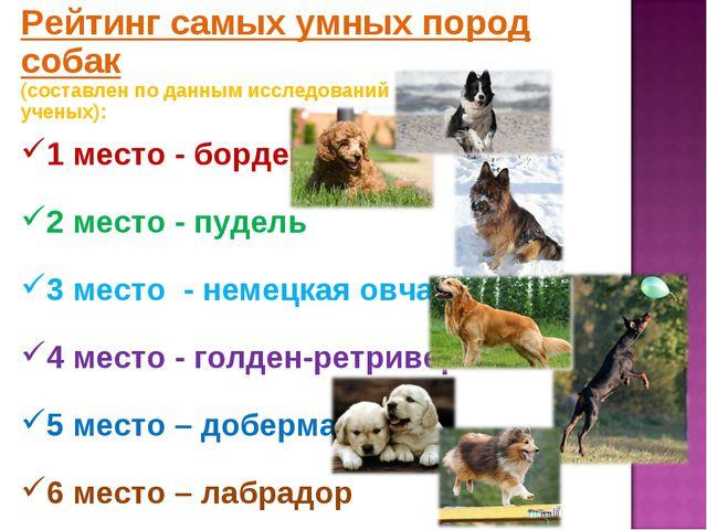 Рейтинг самых умных пород собак (составлен по данным исследований канадских у...