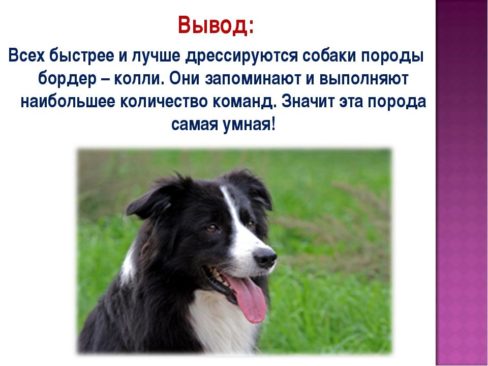 Вывод: Всех быстрее и лучше дрессируются собаки породы бордер – колли. Они за...