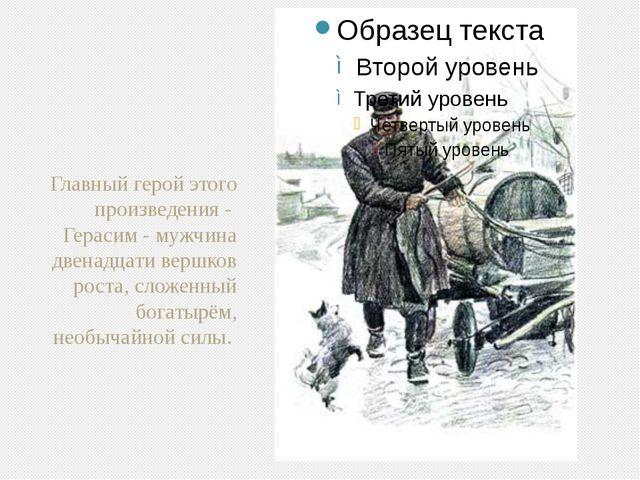 Главный герой этого произведения -  Герасим - мужчина двенадцати вершков рост...