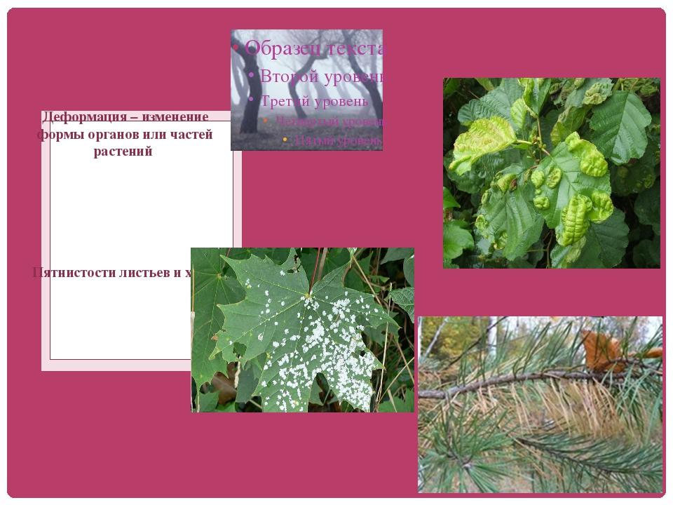 Деформация – изменение формы органов или частей растений Пятнистости листьев...