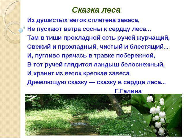 Сказка леса Из душистых веток сплетена завеса, Не пускают ветра сосны к серд...