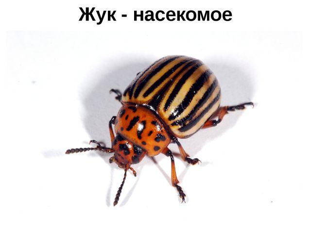 Жук - насекомое
