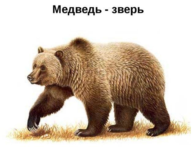 Медведь - зверь
