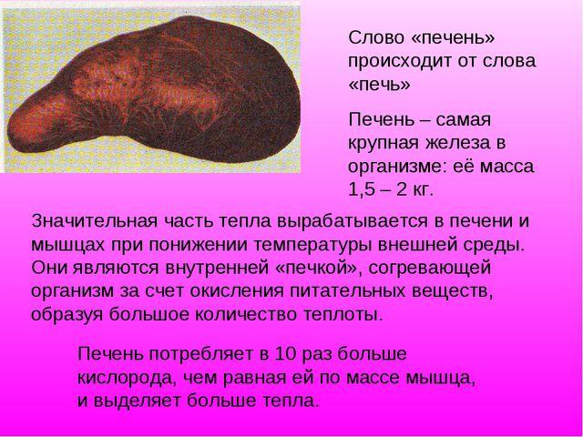 Значительная часть тепла вырабатывается в печени и мышцах при понижении темпе...