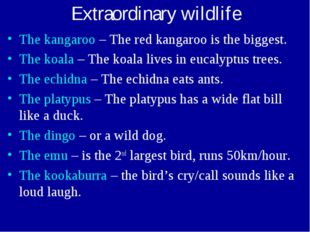 Extraordinary wildlife The kangaroo – The red kangaroo is the biggest. The ko