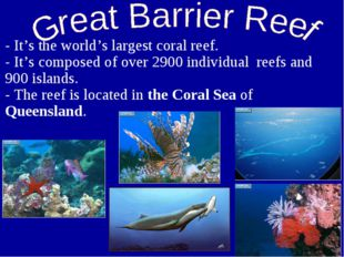 - It's the world's largest coral reef. - It's composed of over 2900 individua