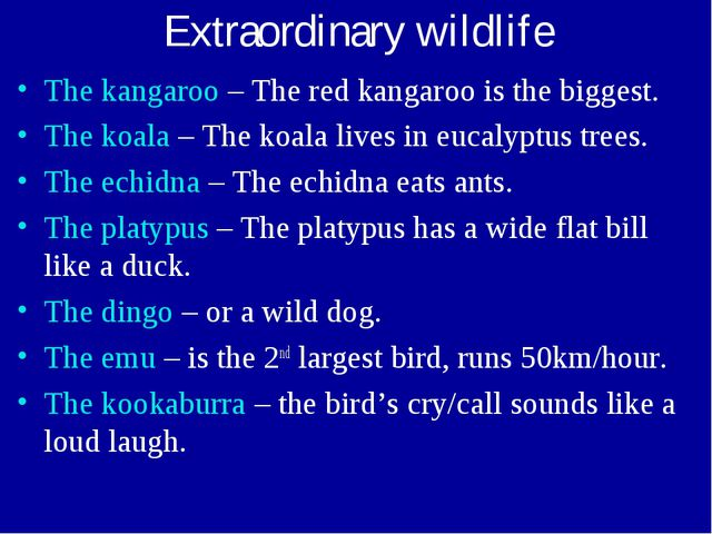 Extraordinary wildlife The kangaroo – The red kangaroo is the biggest. The ko...