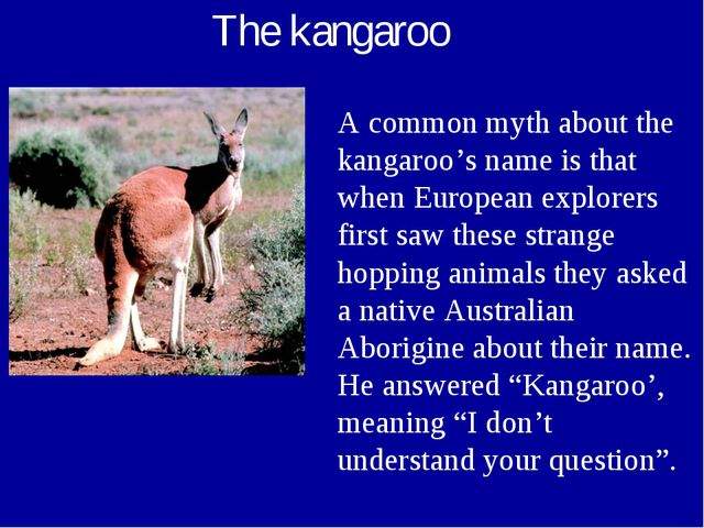 The kangaroo A common myth about the kangaroo's name is that when European ex...