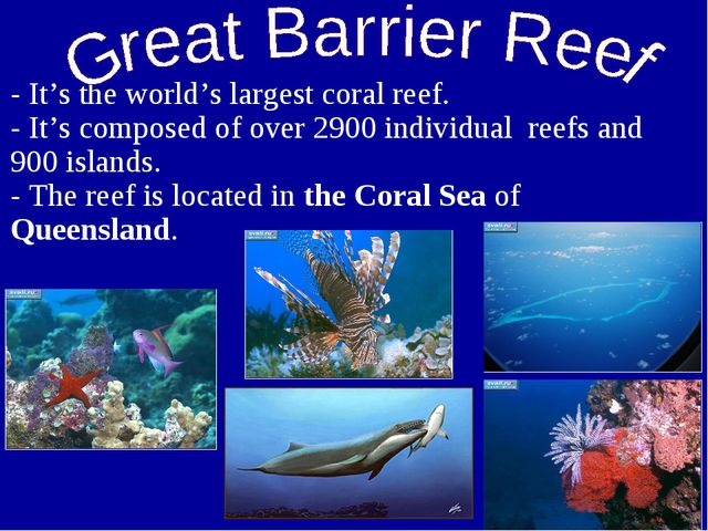 - It's the world's largest coral reef. - It's composed of over 2900 individua...
