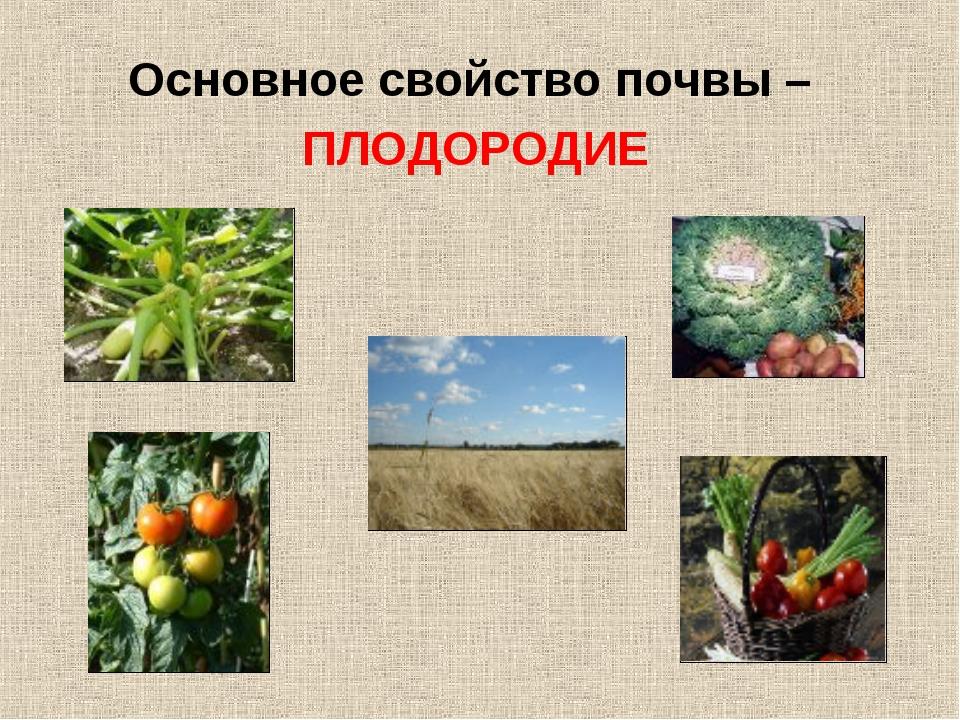 Основное свойство почвы – ПЛОДОРОДИЕ
