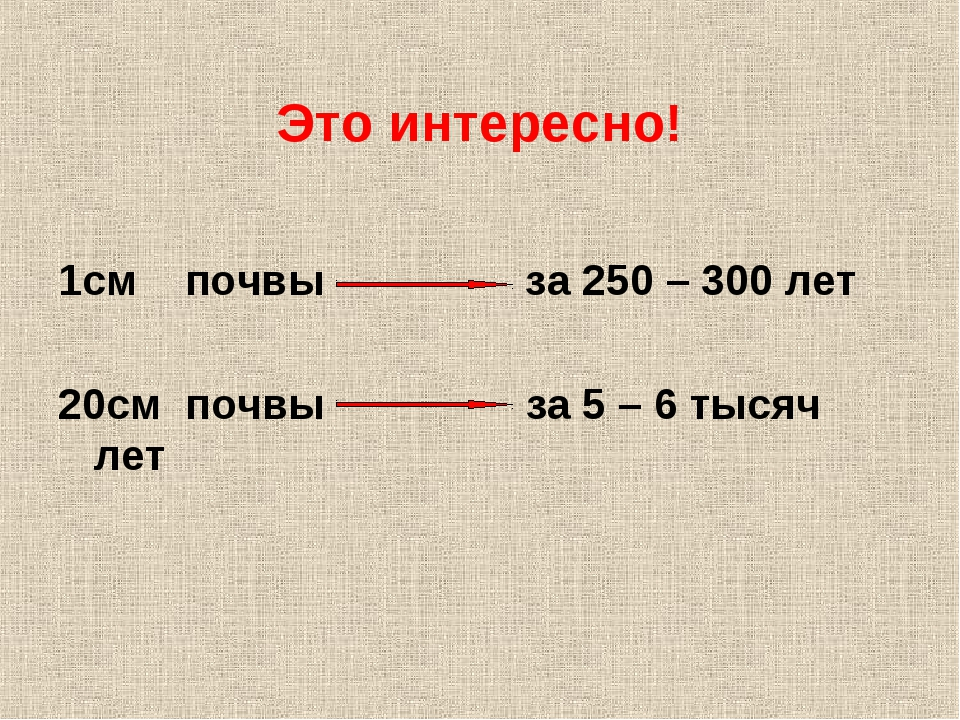 Это интересно! 1см почвы за 250 – 300 лет 20см почвы за 5 – 6 тысяч лет