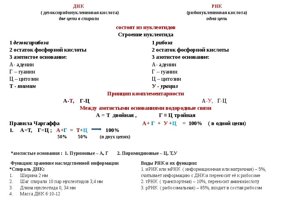 ДНК ( дезоксирибонуклеиновая кислота) две цепи в спирали РНК (рибонуклеинова...