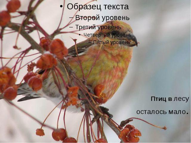 Птиц в лесу осталось мало.