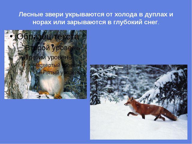 Лесные звери укрываются от холода в дуплах и норах или зарываются в глубокий...
