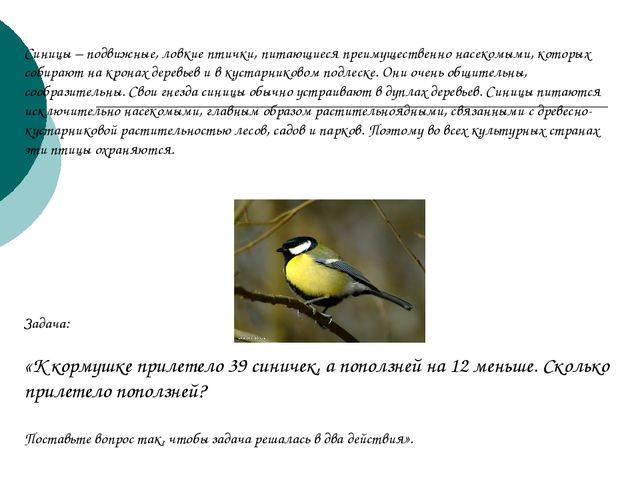 Синицы – подвижные, ловкие птички, питающиеся преимущественно насекомыми, кот...