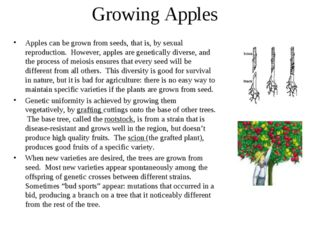 Growing Apples Apples can be grown from seeds, that is, by sexual reproductio
