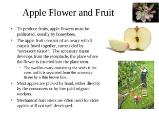 Apple Flower and Fruit To produce fruits, apple flowers must be pollinated, u