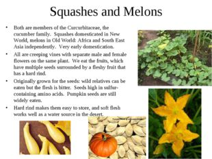Squashes and Melons Both are members of the Curcurbitaceae, the cucumber fami