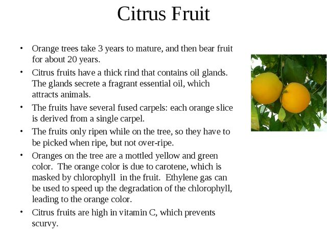 Citrus Fruit Orange trees take 3 years to mature, and then bear fruit for abo...