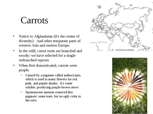 Carrots Native to Afghanistan (it's the center of diversity). And other tempe...