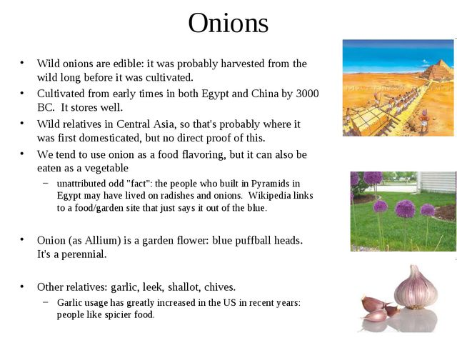 Onions Wild onions are edible: it was probably harvested from the wild long b...