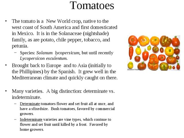 Tomatoes The tomato is a New World crop, native to the west coast of South Am...
