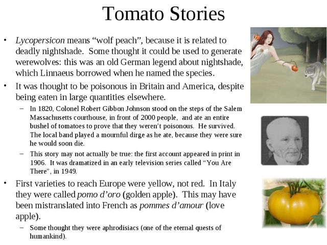"Tomato Stories Lycopersicon means ""wolf peach"", because it is related to dead..."