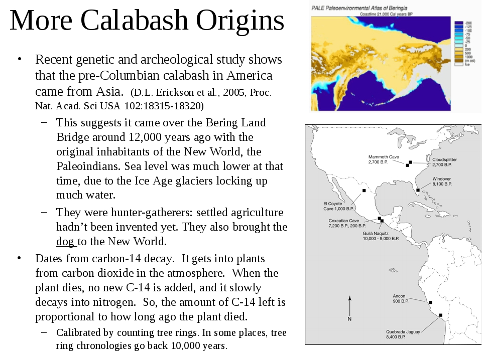More Calabash Origins Recent genetic and archeological study shows that the p...