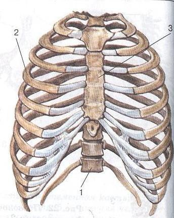 0009-002-Skelet-tulovischa.jpg